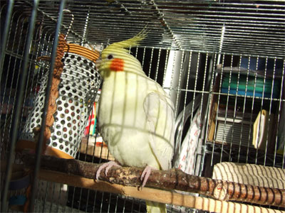 piro20081125-1.jpg