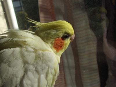 piro20081125-2.jpg