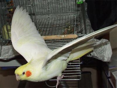 piro20081126-5.jpg