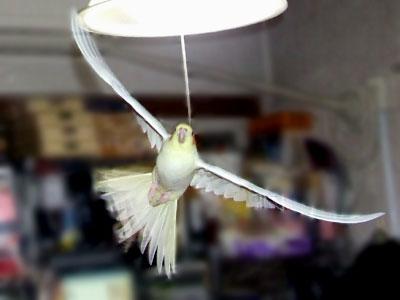 piro20081127-3.jpg