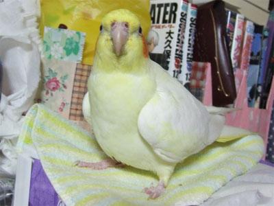 piro20081127-4.jpg
