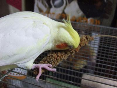 piro20081127-5.jpg
