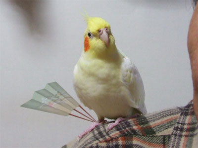 piro20081128-2.jpg