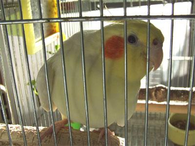 piro20081129-1.jpg