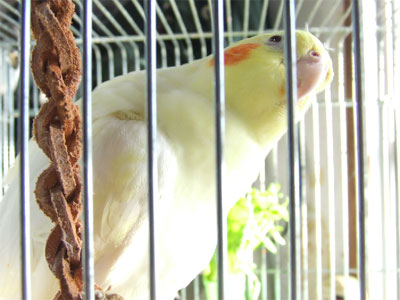 piro20081129-2.jpg