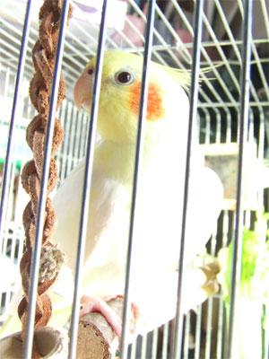 piro20081129-3.jpg
