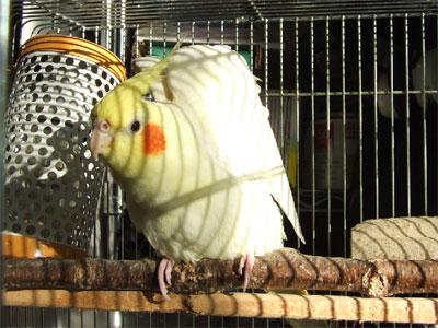 piro20081130-2.jpg