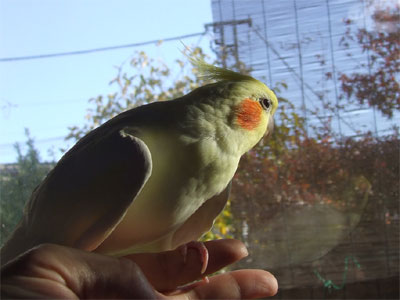 piro20081130-3.jpg