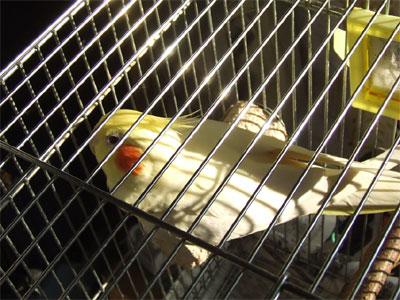 piro20081222-1.jpg