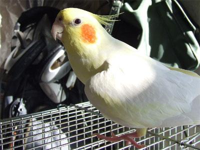 piro20081226-1.jpg
