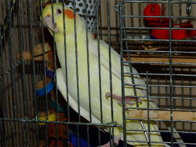 piro20090130-2.jpg