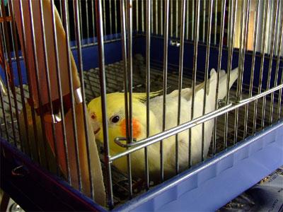 piro20090201-2.jpg