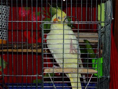 piro20090220-4.jpg