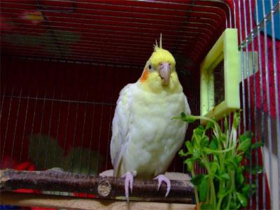 piro20090225-2.jpg
