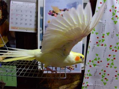 piro20090304-1.jpg
