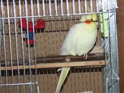 piro20090322-5.jpg