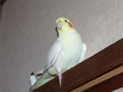 piro20090324-2.jpg