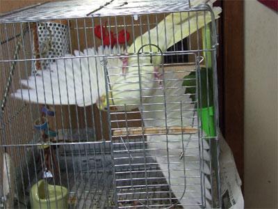 piro20090326-1.jpg