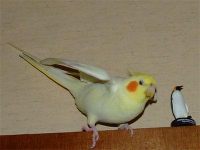 piro20090421-1.jpg