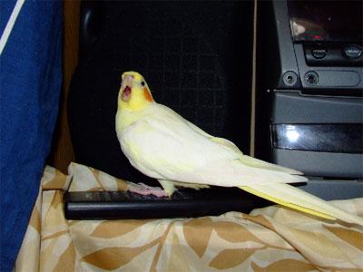 piro20090617-3.jpg