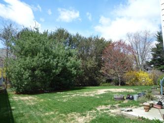 backyard_250