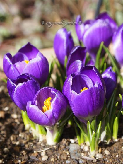 blog1000flowers