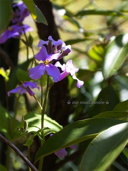 blog1000flowers 画像