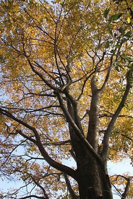 1127-2欅の紅葉