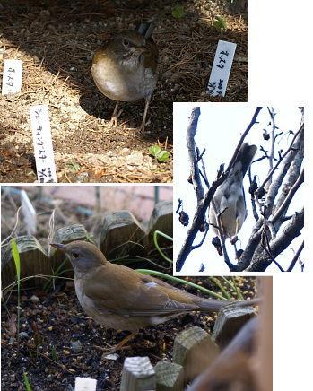 0209-7小鳥編集