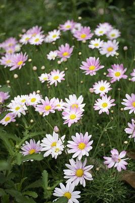 0427-11花グラデーションピンク
