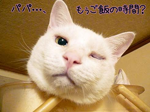 102902_ぶーちゃん