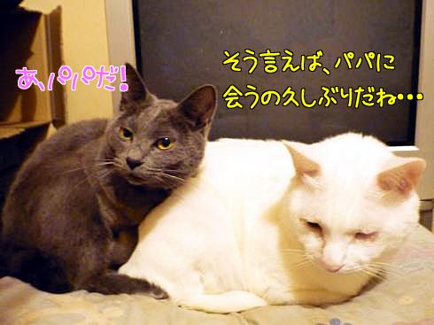 1106_01ゆきぶー