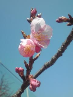 桜2090210_1121~01