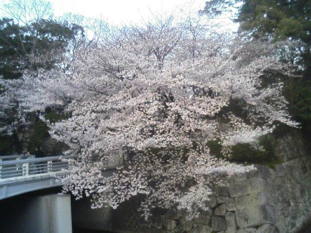 桜駿府城TS330034