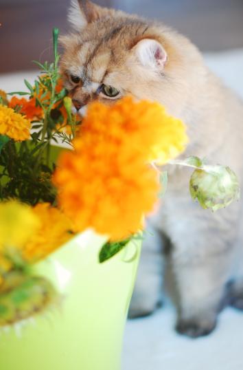 お花の匂い久しぶりだぞ。
