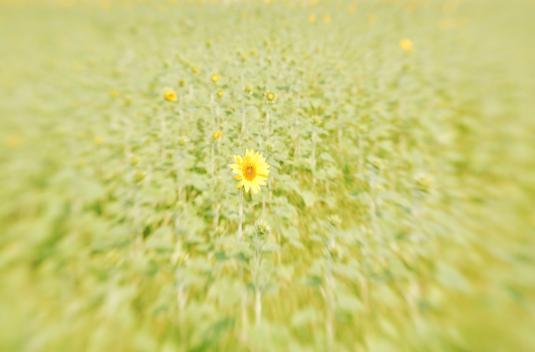 向日葵のひとりごと・・