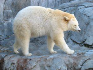 1100115_white_bear.jpg