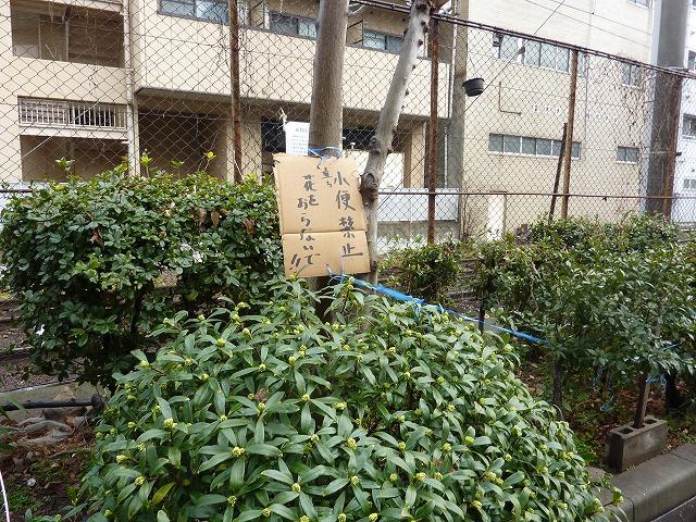 s-大阪 あいりん地区 080