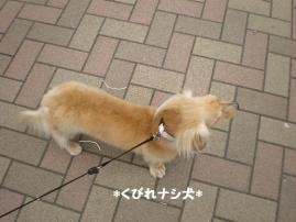 くびれナシ犬