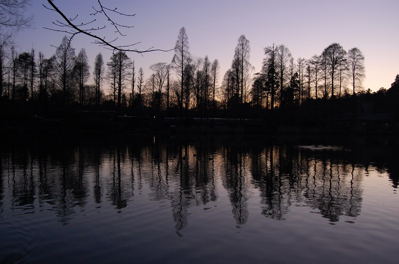 井の頭公園5
