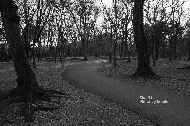 井の頭公園遊歩道