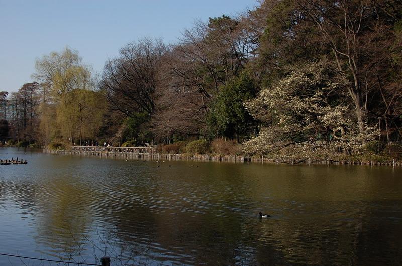 陽だまりの上池