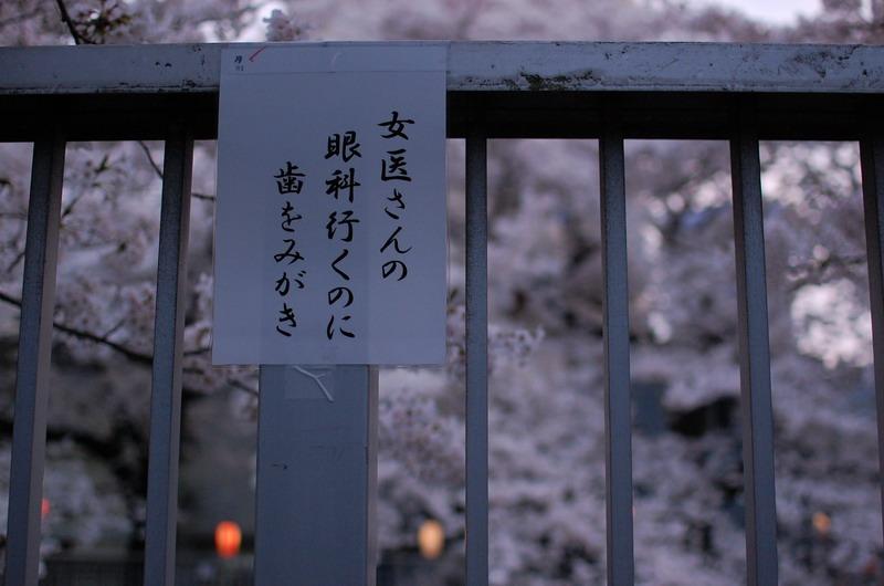 早稲田桜3