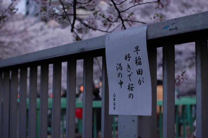 早稲田桜6
