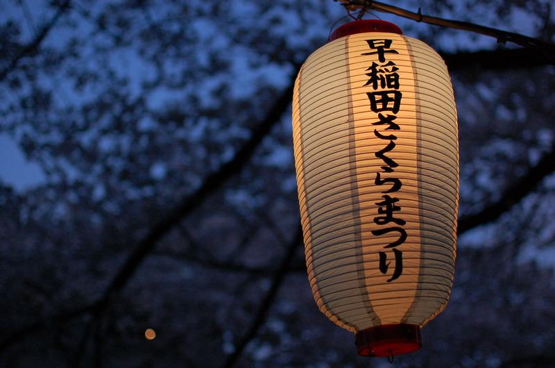 早稲田桜5