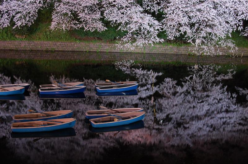 千鳥ヶ淵桜4