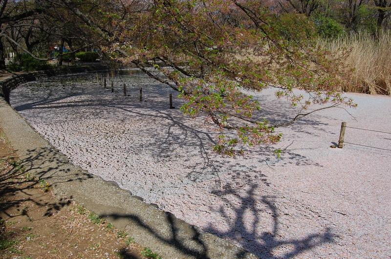 善福寺下池2