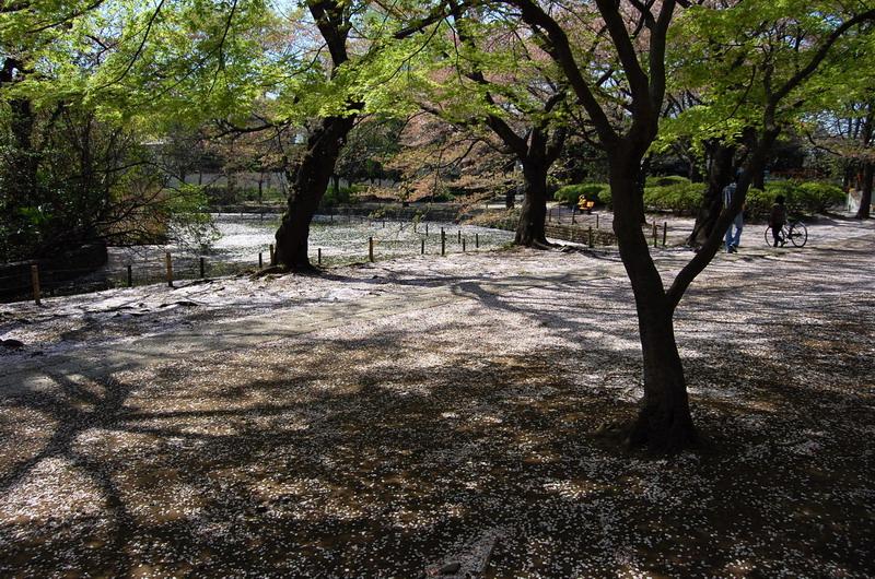 善福寺下池3