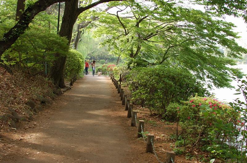 上池新緑遊歩道