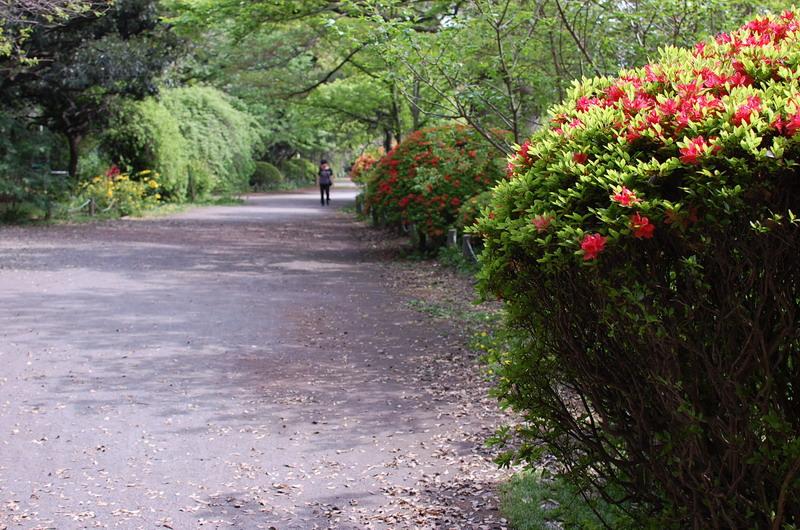 上池つつじ遊歩道